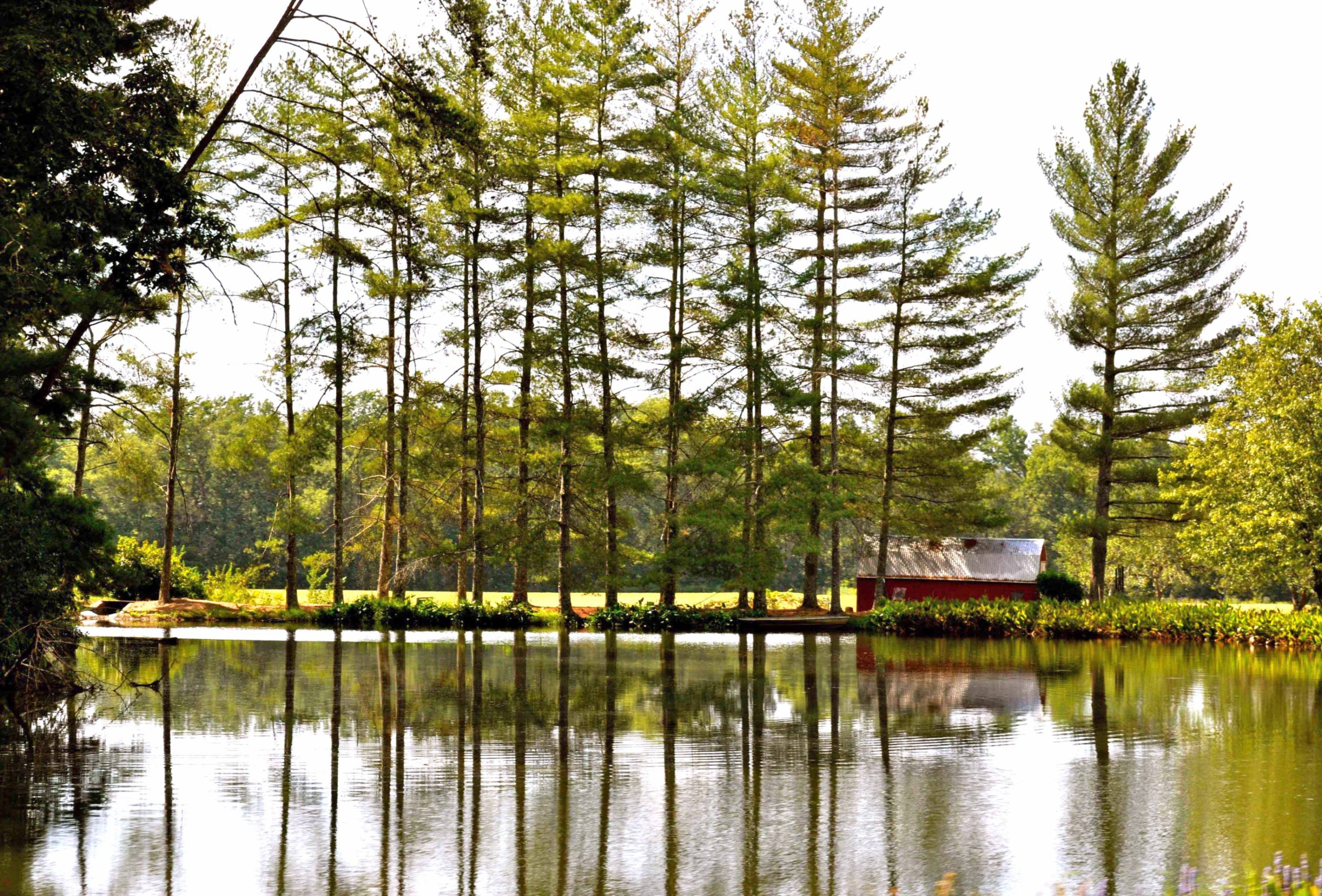 photo taken across the pond showing a red barn with tall trees around