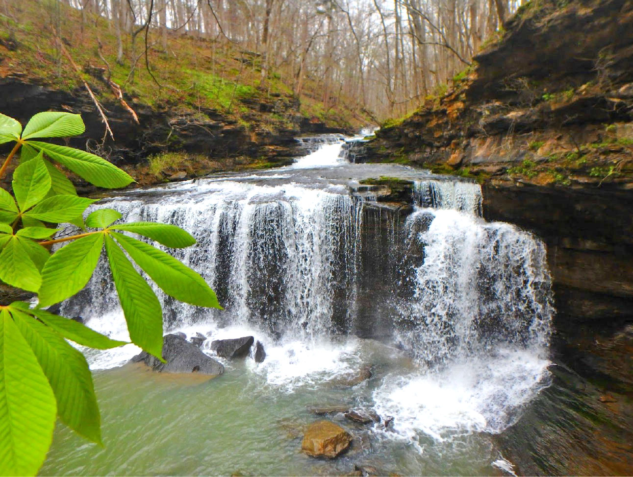 photo of a water fall in the woods